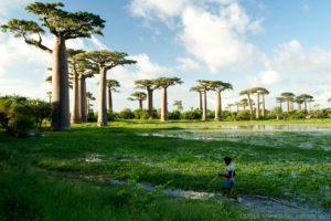 Madagascar & Reunion 2012