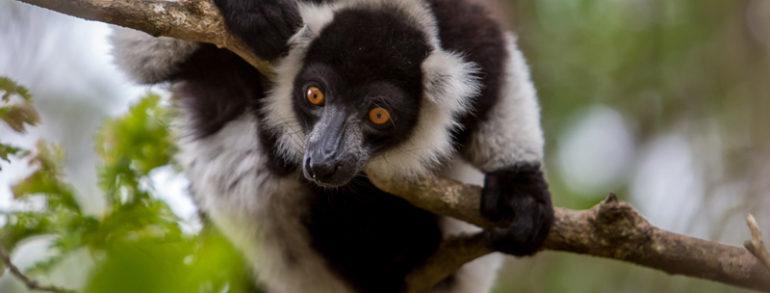 Voyage à Madagascar: un safari photo spécial lémurien