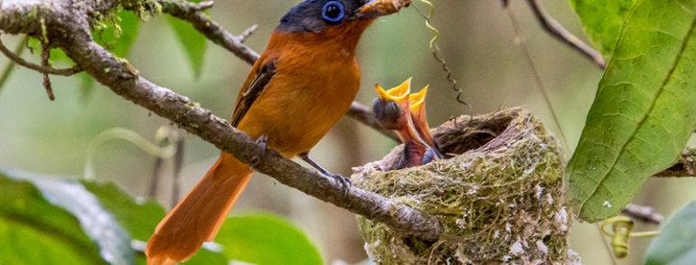 Découvrez Madagascar, une faune et flore endémique