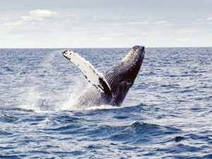 festival des baleines Sainte Marie