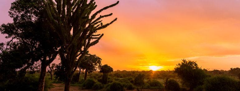 Madagascar, une destination intéressante pour un safari photo en nature et paysage