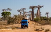 L'allée des Baobabs: découvrez le site le plus photographié à Madagascar