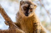 Pourquoi choisir Madagascar pour vos prochains voyages?