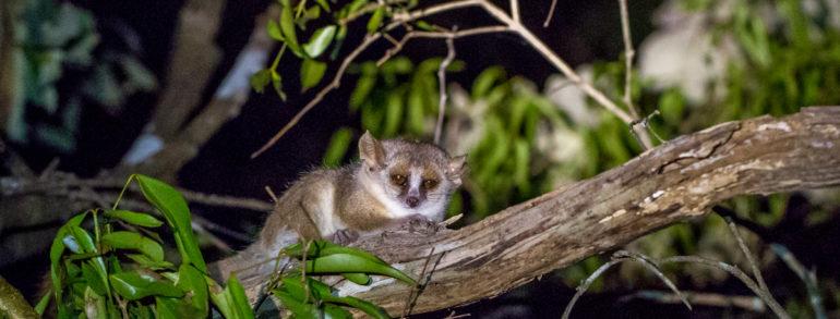 Les meilleurs parcs nationaux pour voir les lémuriens de Madagascar
